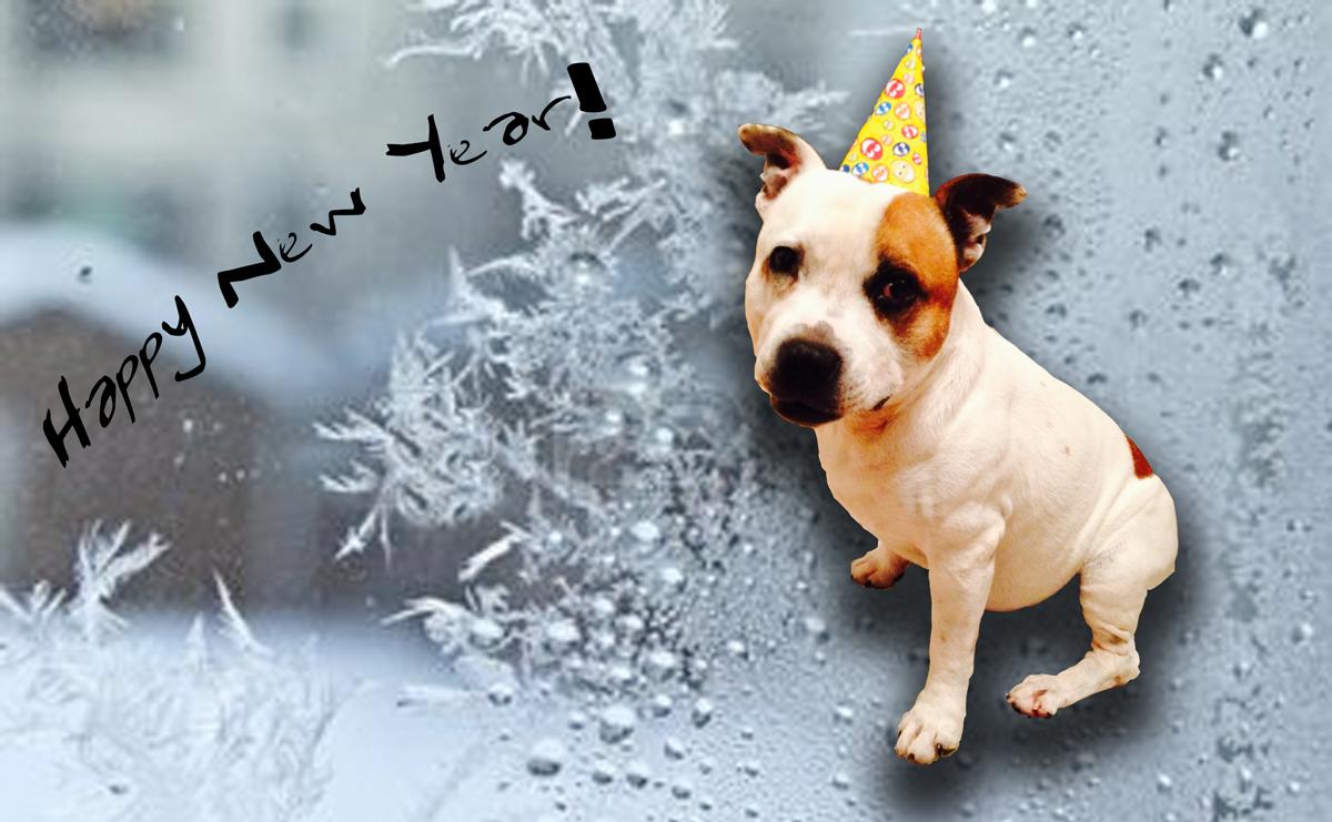 Neo-happy-new-year2