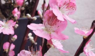 Fruehlingsblumen_03