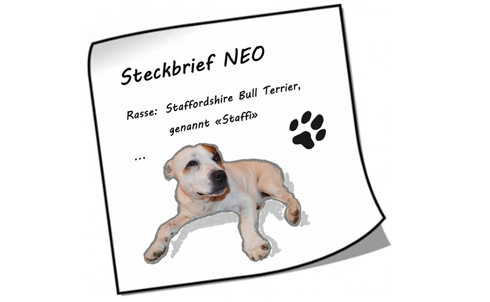 Neo_Steckbrief_Format_01