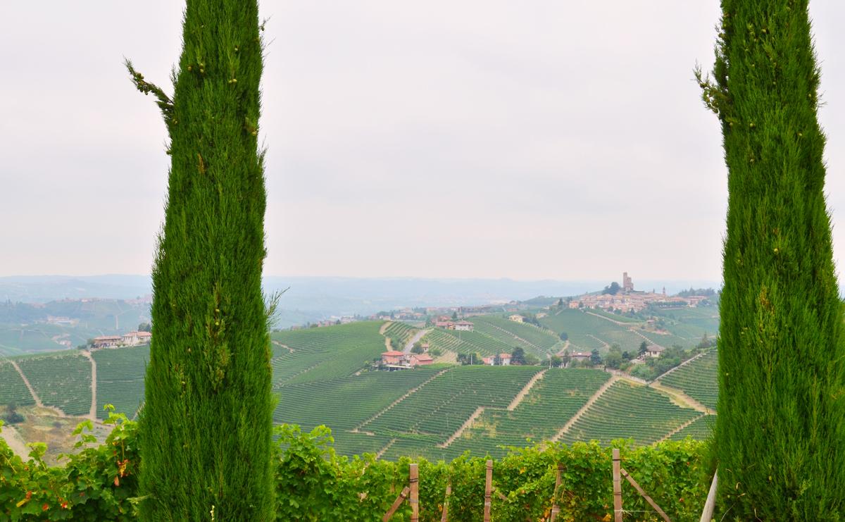 Piemont_Weinberge_03